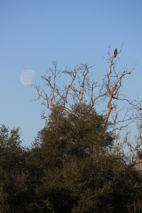 The Eagle and the Full Moon